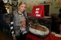 Выставка кошек. 21.12.2014, Фото: 7