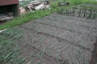 Восстановление домов в селе Воскресенское после урагана. 2.07.2014, Фото: 9