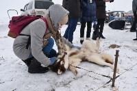 Праздник северных собак на Куликовом поле , Фото: 8