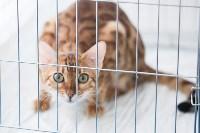 В Туле прошла выставка «Пряничные кошки» , Фото: 19