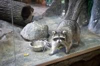 Тульский экзотариум: животные, Фото: 37