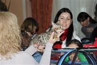 В Туле прошла международная выставка кошек, Фото: 31