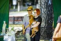 В Центральном парке Тулы проходит фестиваль помощи животным, Фото: 2
