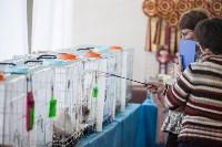 В Туле прошла выставка «Пряничные кошки» , Фото: 40
