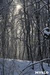 Зимняя сказка Платновского парка, Фото: 4