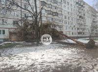 В Туле упавшее на девятиэтажку дерево повредило несколько балконов, Фото: 5