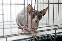 Выставка кошек в ГКЗ. 26 марта 2016 года, Фото: 12