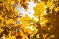Золотая осень в Туле-2019, Фото: 78