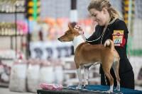 Выставка собак в Туле, Фото: 49