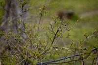 Весна 2020 в Туле: трели птиц и первые цветы, Фото: 42