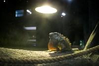 Тульский экзотариум: животные, Фото: 20