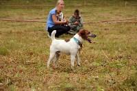 Выставка охотничьих собак под Тулой, Фото: 23