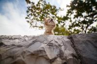 Тульские котики, Фото: 44