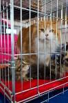 Выставка кошек в ГКЗ. 26 марта 2016 года, Фото: 46