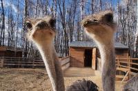 Куда свозить детей посмотреть на животных в 100 км от Тулы: обзор, Фото: 9