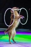 Тульский цирк, Фото: 28
