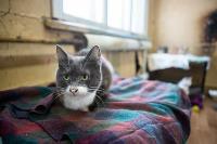 Волонтеры спасли кошек из адской квартиры, Фото: 15