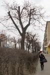 Кронированные деревья на ул.Октябрьской. 7.04.2015, Фото: 5