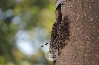 В Туле в фонарном столбе поселились пчелы, Фото: 4