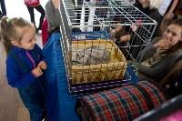 Выставка кошек в ГКЗ. 26 марта 2016 года, Фото: 30
