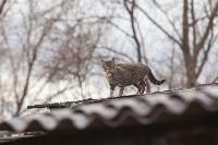Тульские котики, Фото: 63