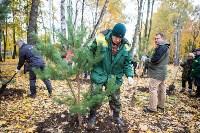 В Центральном парке Тулы появился сосновый бор «Слободы», Фото: 43