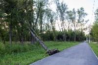 В Баташевском саду из-за непогоды упали вековые деревья, Фото: 6