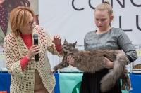 Выставка кошек в Туле, Фото: 9