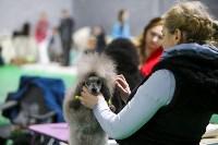 Выставка собак в Туле 14.04.19, Фото: 17