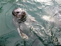 Жизнь тюленя: мечта!, Фото: 1