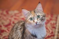 Тульские котики, Фото: 37