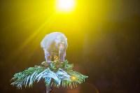 """""""Тайна пирата"""" в Тульском цирке, Фото: 111"""