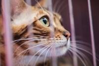 Выставка кошек в МАКСИ, Фото: 50