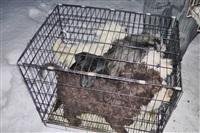 Похищенные собаки, Фото: 33