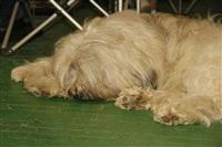 В Туле прошла всероссийская выставка собак, Фото: 22