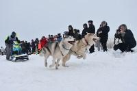 Праздник северных собак на Куликовом поле , Фото: 76
