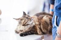 """Выставка """"Пряничные кошки"""". 15-16 августа 2015 года., Фото: 18"""