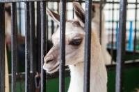 Цирк Гии Эрадзе в Туле, Фото: 17