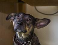 Тульский центр ветеринарной медицины открылся по новому адресу, Фото: 5