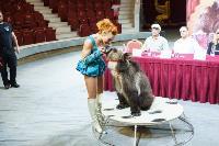 Пресс-конференция в Тульском цирке, Фото: 12