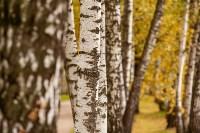 Золотая осень в Туле-2019, Фото: 106