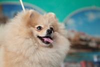 Выставка собак в Туле, 29.11.2015, Фото: 107
