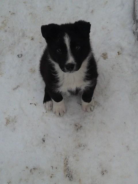 Наш любимый пёсик по кличке Бим