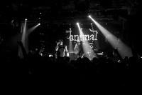 Animal ДжаZ, Фото: 68