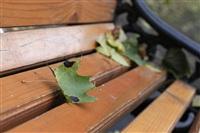 Осень, Фото: 3