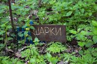Кладбище домашних животных в Туле, Фото: 46