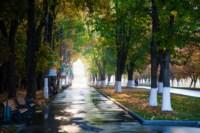 Центральный парк, утро, осень, Фото: 40