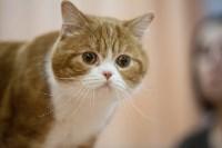 В Туле прошла выставка «Пряничные кошки» , Фото: 116