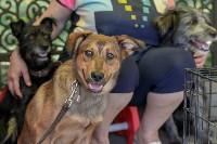 Фестиваль помощи животным в Центральном парке, Фото: 2