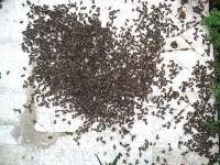 Гибель пчел в Щекинском районе, Фото: 8